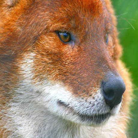 Howletts Wild Animal Park & Canterbury